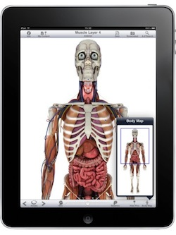 Ipad anatomy